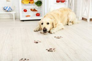 Dog With Muddy Footprints on Flooring