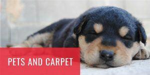Dog sleeping on carpet