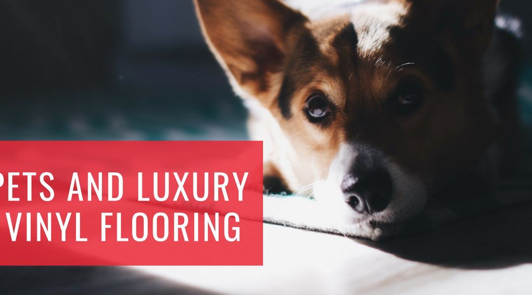 Pets and Luxury Vinyl Flooring
